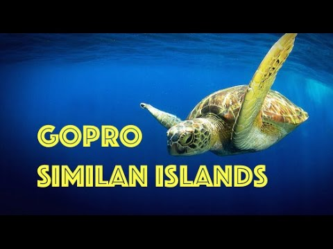 Scuba Diving Similan Islands, Thailand Underwater HD Video by Freedom Divers, Phuket