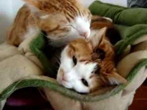 「[ネコ]ビビるけども、必死に耳でパンチを繰り出す気弱なネコ。」のイメージ