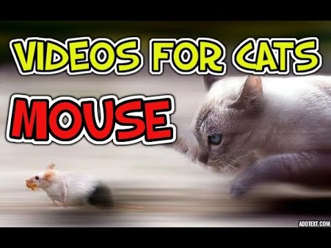 Videos for Cats to Watch – MOUSE video for your cats