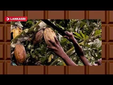History-of-Chocolate