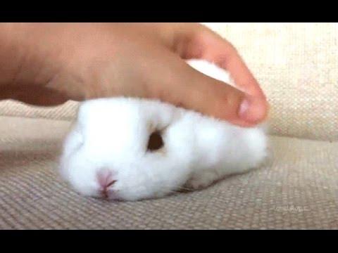 Les lapins - Une vidéo drôle et mignon lapin. Compilation | HD