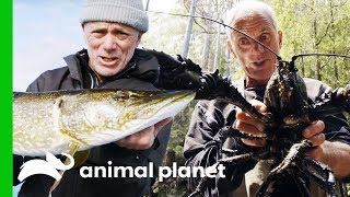 Jeremy's Most Incredible Catches From Season 1 | Jeremy Wade's Dark Waters by Animal Planet