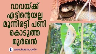 Video Hostile Cobra traps Man | Vava Suresh | Snake Master | Kaumudy TV MP3, 3GP, MP4, WEBM, AVI, FLV Juli 2018