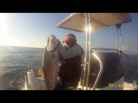 pesca mare: ricciola bellissima in pesca a traina