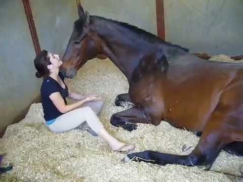Girl and horse friendship