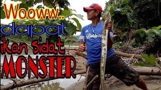 Download Video LUAR BIASA !! Temukan Spot Baru,Nggak Nyangka Dapat Ikan SIDAT Monster MP3 3GP MP4