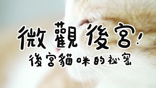 黃阿瑪的後宮生活-微觀後宮,後宮貓咪的秘密