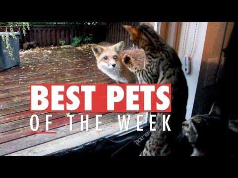 Best Pets of the Week   October 2017 Week 3