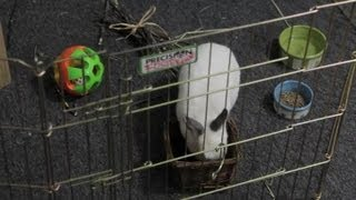 Grass Cutting for Rabbits : Rabbit Care Tips