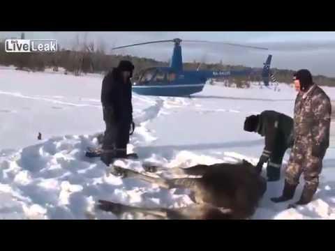 Russos salvam burro de cair na neve