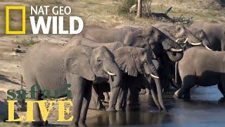 Safari Live - Day 165 | Nat Geo Wild by Nat Geo WILD