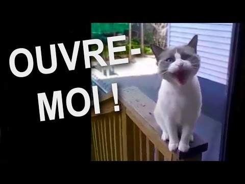 how to say i dont speak french in french