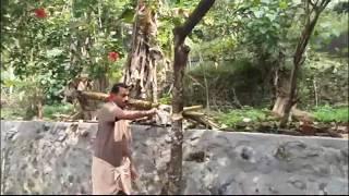 Video റംബുട്ടാൻ മരം ഗ്രാഫ്റ്റ് ചെയ്യുന്ന രീതി  - Grafting a Rambutan Tree in kerala MP3, 3GP, MP4, WEBM, AVI, FLV April 2018