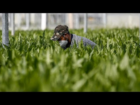 COVID-19: Τα προβλήματα στην αγροτοκαλλιέργεια