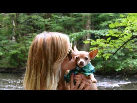 A Dogs Unconditional Love ~ With Tommy Chihuahua