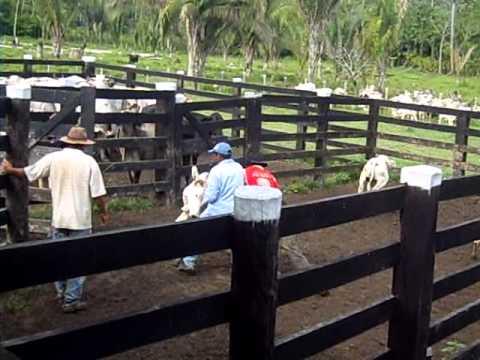 Vacinação Assistida em Novo Repartimento Janeiro 2011