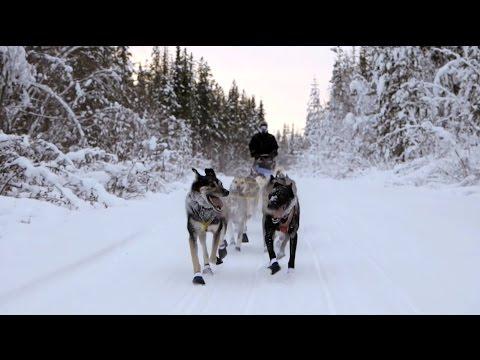 La course de traineau à chiens au Yukon
