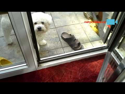 Pes Charlie, když přijde domů