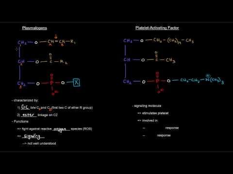 Lipids (Part 7 of 11) - Membrane Lipids - Glycerophospholipids with Ether Linkages (Plasmalogens)
