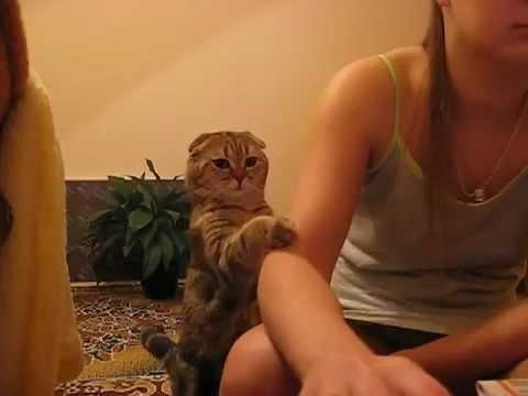 gatto chiede coccole! tenerissimo!