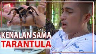 Download Video Kenalan Sama TARANTULA MP3 3GP MP4