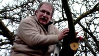 #303 Schneiden im Garten 2011 - Apfelhochstamm 6v6