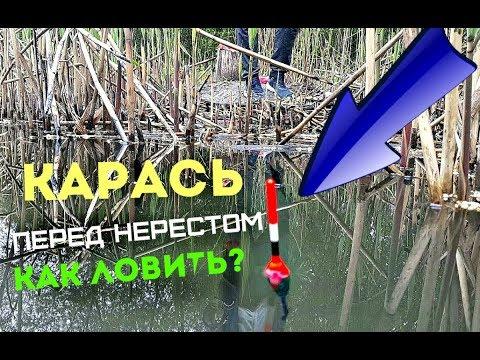 Как ловить карася весной перед нерестом Клюёт ли карась перед нерестом - DomaVideo.Ru