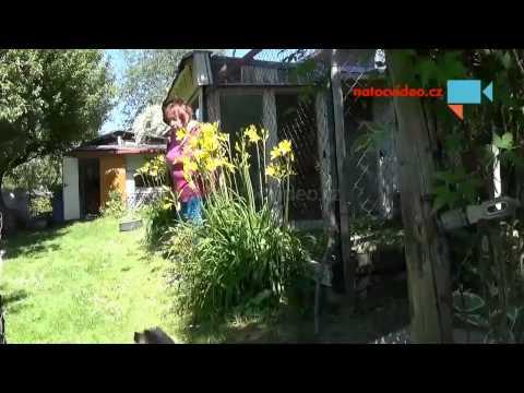Zahradní  kytičky .
