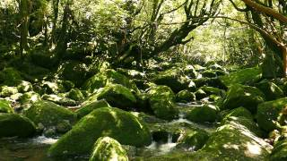 Yakushima Japan  city images : Yakushima JAPAN 2015 /屋久島
