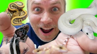 ALL MY LEOPARD GECKOS AND BALL PYTHONS!!   BRIAN BARCZYK by Brian Barczyk