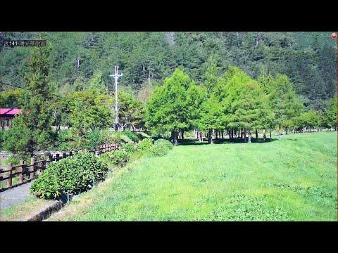 『武陵農場』直播_陽光草原區
