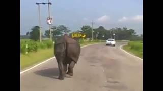 「オラオラオラオラ~!」サイが道路で車を蹴散らしている件