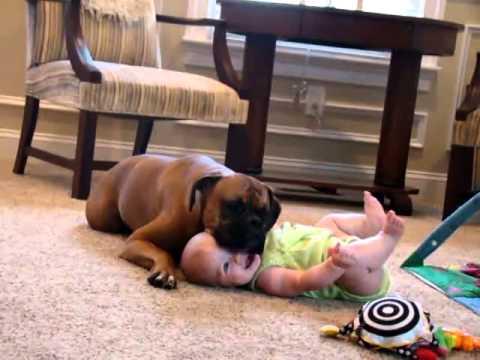 il boxer babysitter lecca il bimbo che ride a crepapelle