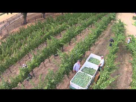 Vellum Wines First Pick 2014 - From the Sky