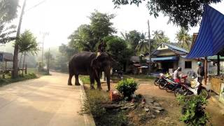 Ko Lanta Thailand  - Elephant Moves Around