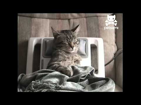 Stressed out kitty gets relaxing massage