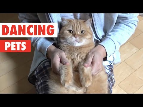 Funny animals - Dancing Pets  Funny Animal Video Compilation 2018