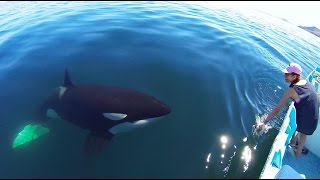 An unforgettable and personal encounter with a killer whale. Music by Bensound.
