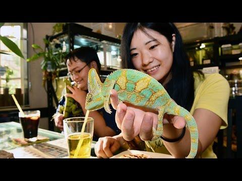 爬虫類カフェ 神戸でじわり人気