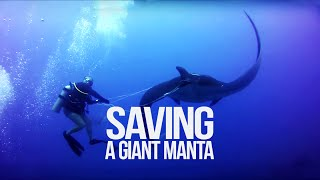 Tangled Manta Ray Asks For Diver's Help