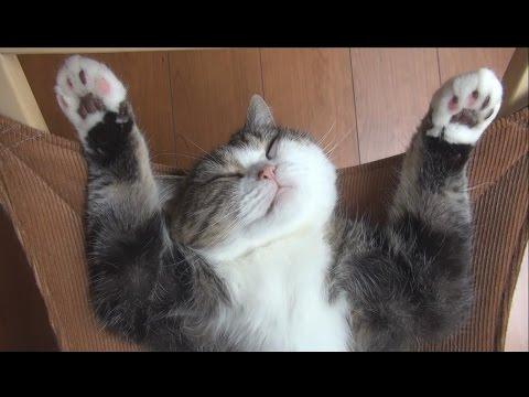 Khi em ngủ trên võng - Ngủ chắc phê lắm, dạng hết cả háng ra :3