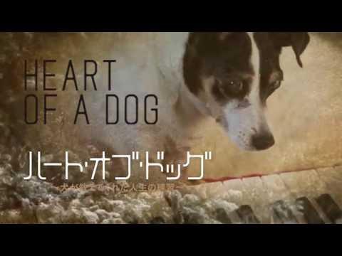 映画「ハート・オブ・ドッグ~犬が教えてくれた人生の練習~」予告編