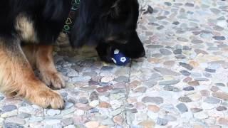 Pes sám na zahradě