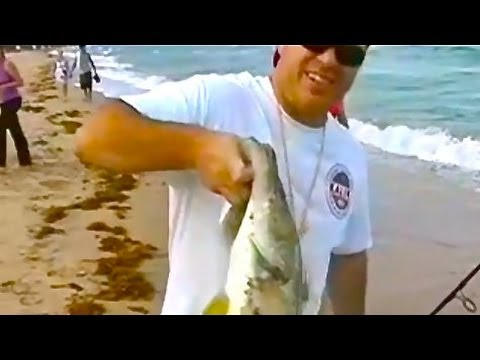 Awesome Snook Fishing Off the Beach – FL
