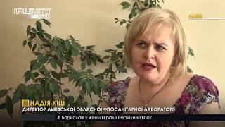 Випуск новин на ПравдаТУТ Львів 08.08.2018