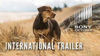 A DOG'S WAY HOME – International Trailer