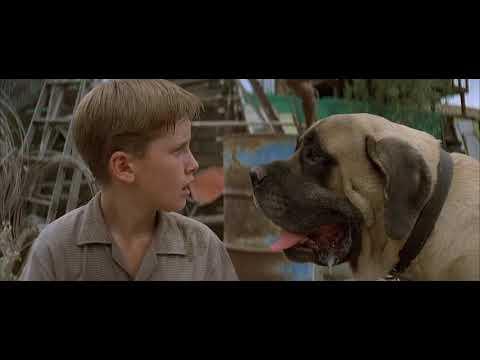 the sandlot (1993)- the beast trapped! SCENE
