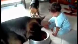 Yemeğime Dokunma!