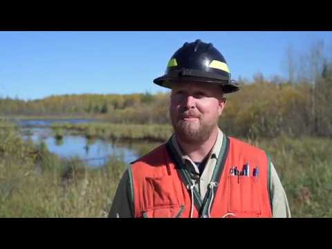 Forestry Careers with MNDNR - Program Forester
