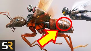 Video 10 Ant-Man And The Wasp Theories That Turned Out SO Wrong MP3, 3GP, MP4, WEBM, AVI, FLV Juli 2018